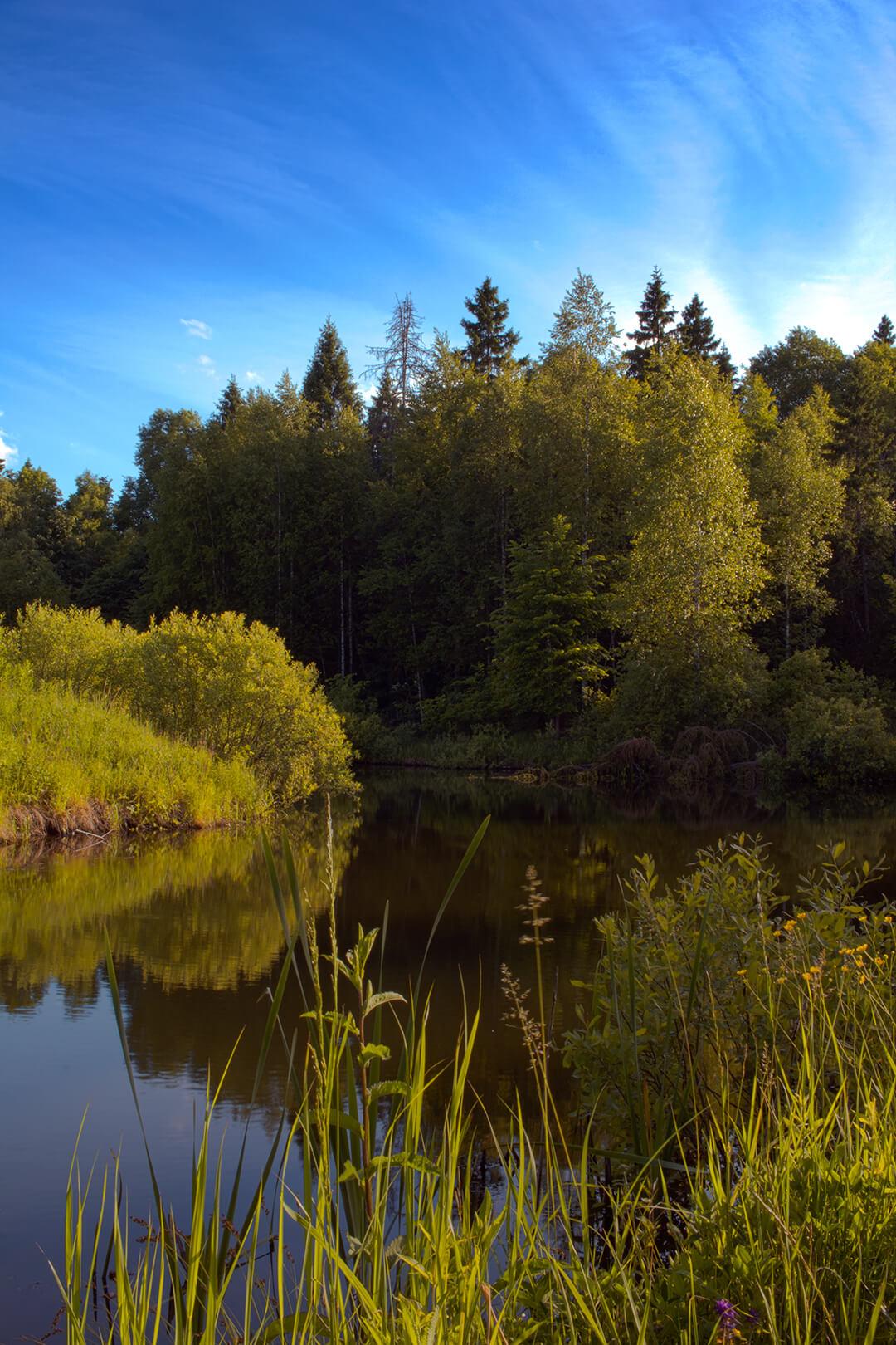 проекты освоения лесов